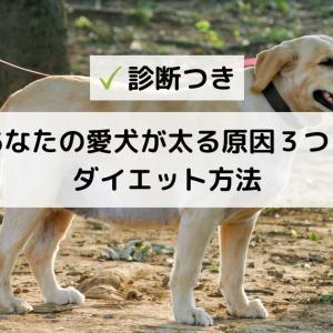 【診断つき】あなたの愛犬が肥満になる原因3つとダイエット方法