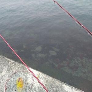 ホシガレイ狙って浜名湖へ! ~ 4月並みの気温ですやん ~