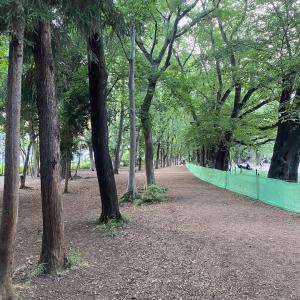 Rinshi-no-mori-park