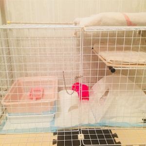 【猫】アイドル野良猫、我が家にきた!