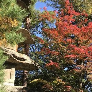 【仙台で紅葉の綺麗なお寺】11月9日の【輪王寺】。赤みがもうちょっとです。