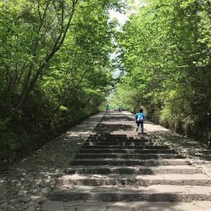 大年寺山の新緑と石段