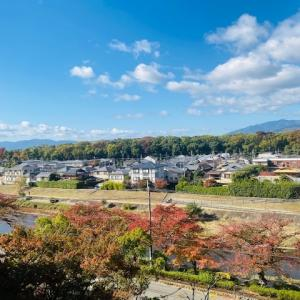 京都紅葉情報 2019今日と紅葉情報 3