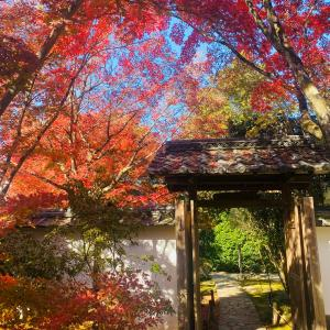 京都紅葉 金福寺1