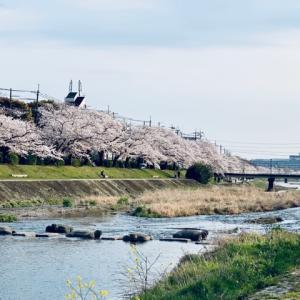 ブログで京都のお花見 第二弾