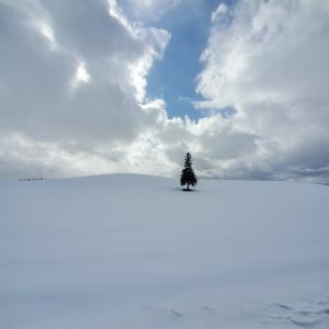美しい冬の感動風景【美瑛の丘】