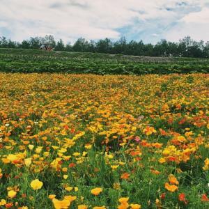 北海道に移住したいと思ったきっかけの場所、四季彩の丘