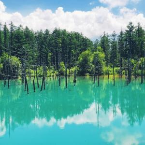 青い池&白ひげの滝ふたたび。