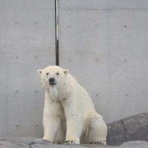 円山動物園 復活!