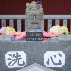 【花詣2021】琴似、発寒、星置、新川皇大神社の花手水
