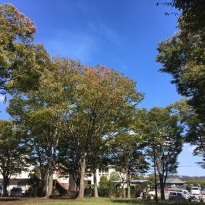 町田市立 かぶと塚公園