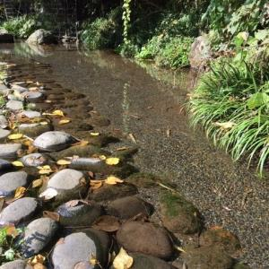 町田市立 滝ノ沢源流公園