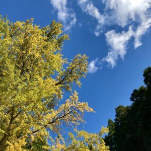 紅葉を見ながらトレーニング?一石二鳥の嬉しい時期♡秋保大滝に行ってきました
