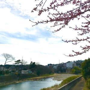 志村けんさん、悲しい、、、ありがとう