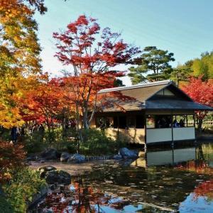 昭和記念公園 落水した楓