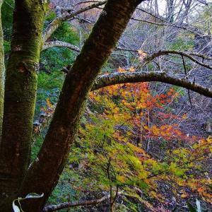 冬枯れする山に残る紅葉