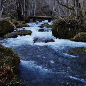 春の奥入瀬渓流にて