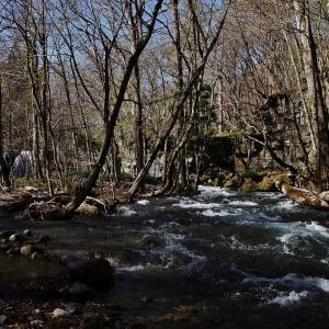奥入瀬渓流の春