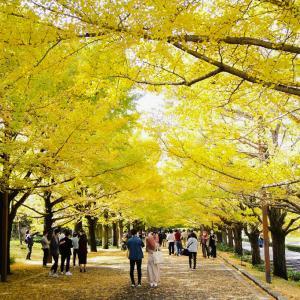 立川カナール 黄色い秋