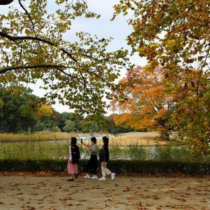 紅葉の昭和記念公園水鳥の池