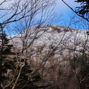 初冬の奥白根山 凍てる岳樺
