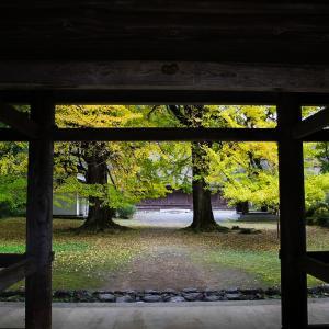 あきる野 広徳寺の大銀杏