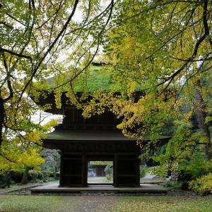 秋留野 広徳寺の大銀杏
