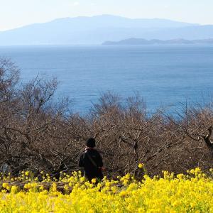 菜の花と春の海