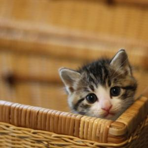 猫は何の為に生きる?人は?