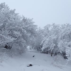 2019.01.18 雲仙岳は天気良すぎってーーー!
