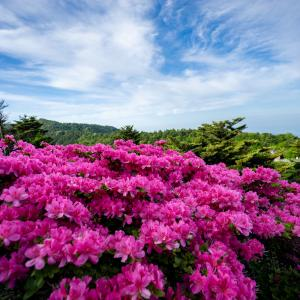 2019.05.17  雲仙・国見岳のミヤマキリシマに逢いに行きましたよ。