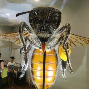 大阪市立自然史博物館 特別展「昆虫」