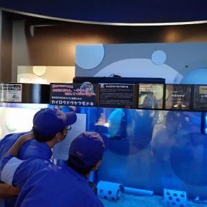 深層水ミュージアム(カイロウドウケツモドキ)の見学