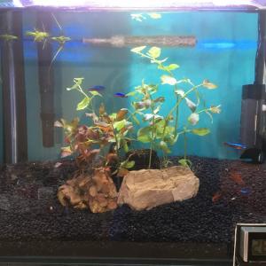 水槽リセット④ リングろ材と瞬間接着剤で水草植栽