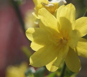 第236話 『野の花を見て 美しいと思い…』 (Bパート)