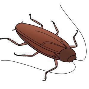 日本には何種類のゴキブリがいるの?