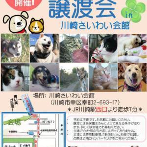 8/25(日)保護猫譲渡会in川崎