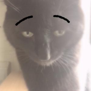 黒猫は可愛さが伝わりにくい(笑)