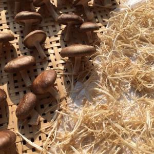 🌞干し椎茸と干しえのきを作りました🐦