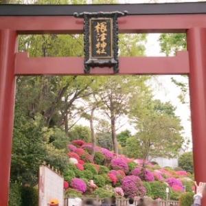 Fちゃんの谷根千ツアー(3)~根津神社つつじまつりと三十六歌仙絵拝観