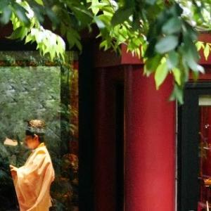 Fちゃんの熱海ツアー(1)~来宮神社の大楠と、麦こがしソフトクリーム~落雁添え~が最高!