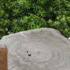 Fちゃんの熱海ツアー(2)~ 「お宮の松」と貫一・お宮マンホール