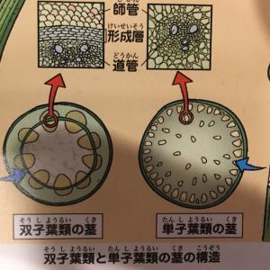 【実験対決】18. 植物の対決