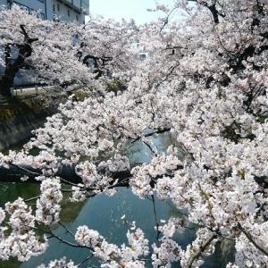 4月4日の桜と胡蝶の料理