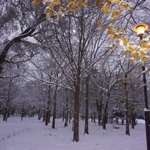 雪 一眼ミラーレスを始めて3ヶ月 Ⅹ物欲