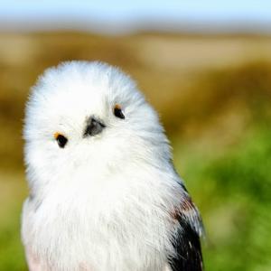 野鳥撮影講座