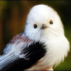 野鳥撮影講座Ⅱ