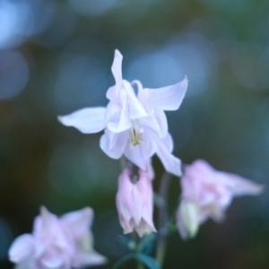 風で揺れる花