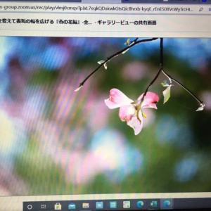 リモート講座 春の花編2