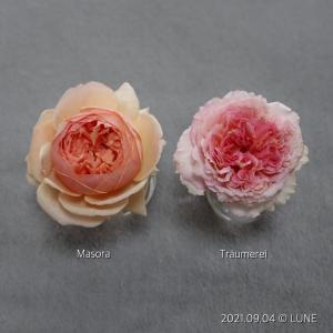 香り比べ 〜 真宙 vs トロイメライ 〜